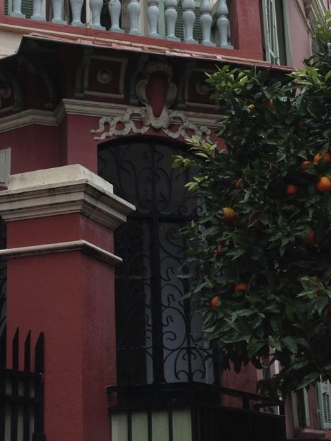 Orange trees were everywhere.