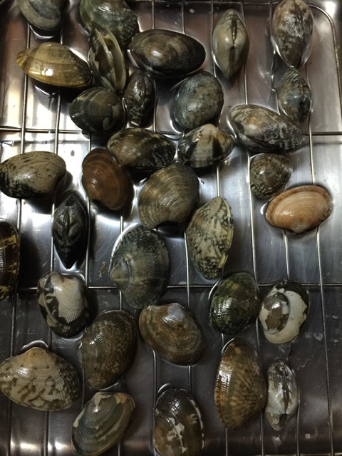 Here come the clams.