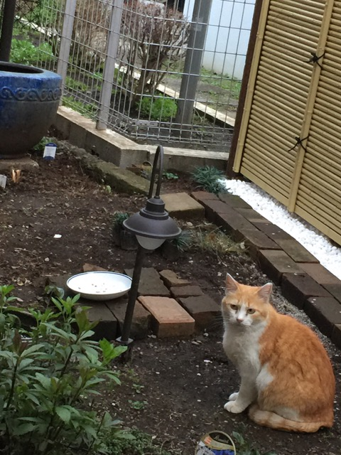 A stray that gets fed on the premises.